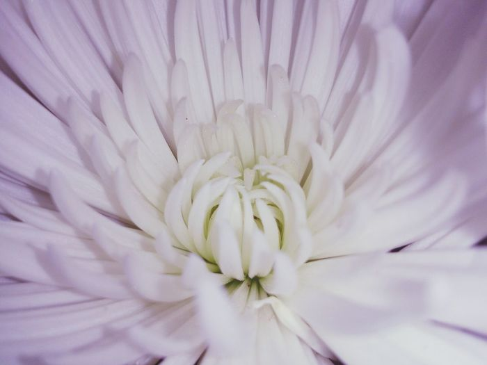 Flores blancas 1denoviembre DiadetodoslosSantos Flower Imissyou