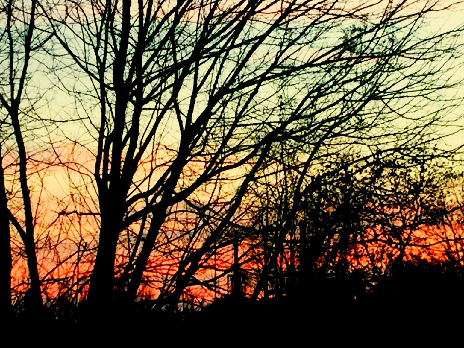 Groviglio di rami - Lodi, gennaio 2016 Trees Branches Landscape Plain Italy Lodi Sunset Alberi Rami Paesaggio Pianura Tramonto