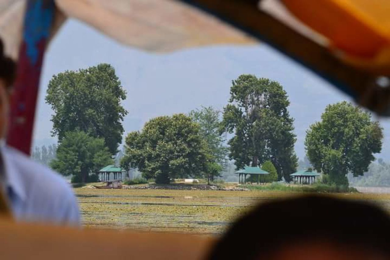 Srinagar Kashmir Tree Tranquil Scene Tranquility Day Solitude Surface Level Scenics No People Green Color