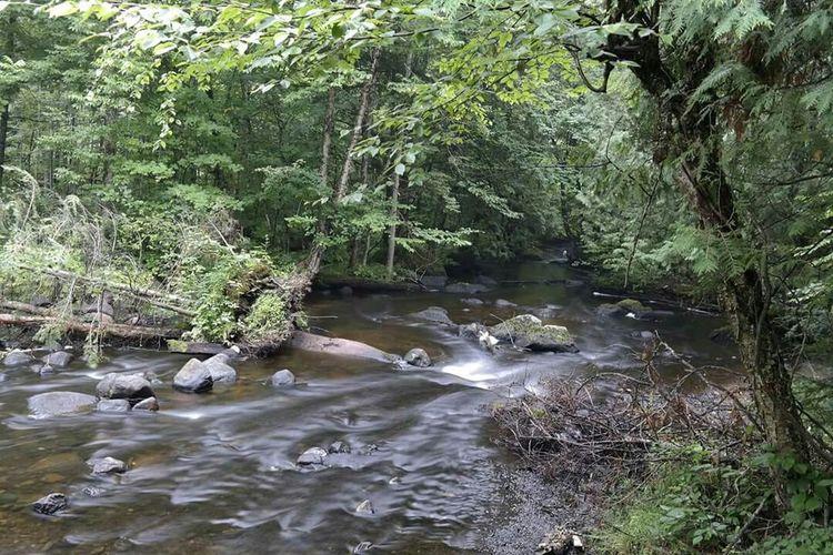 Water Creek Wabeno Wisconsin Forest Watet Nature