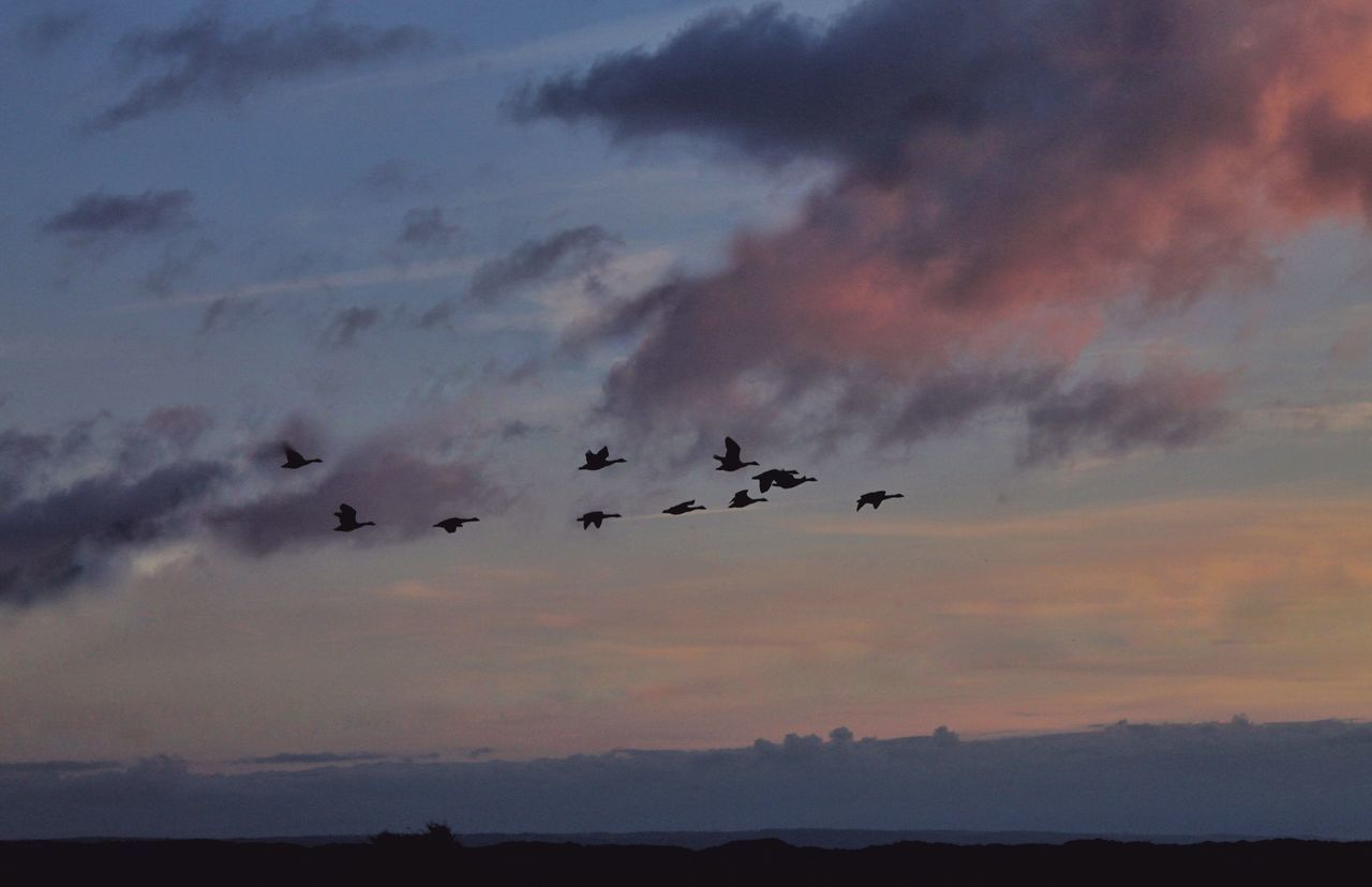 Flying West Silhouette Sunset Flying Sky Scenics Atmosphere Geese Gaggle Of Geese