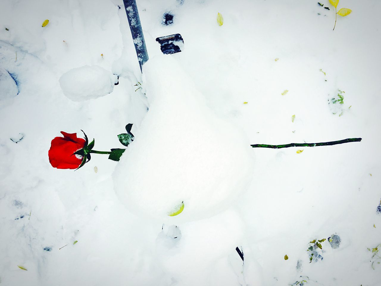 snow, winter, white color, cold temperature, high angle view, nature, day, red, outdoors, full length, flower, beauty in nature, no people, freshness