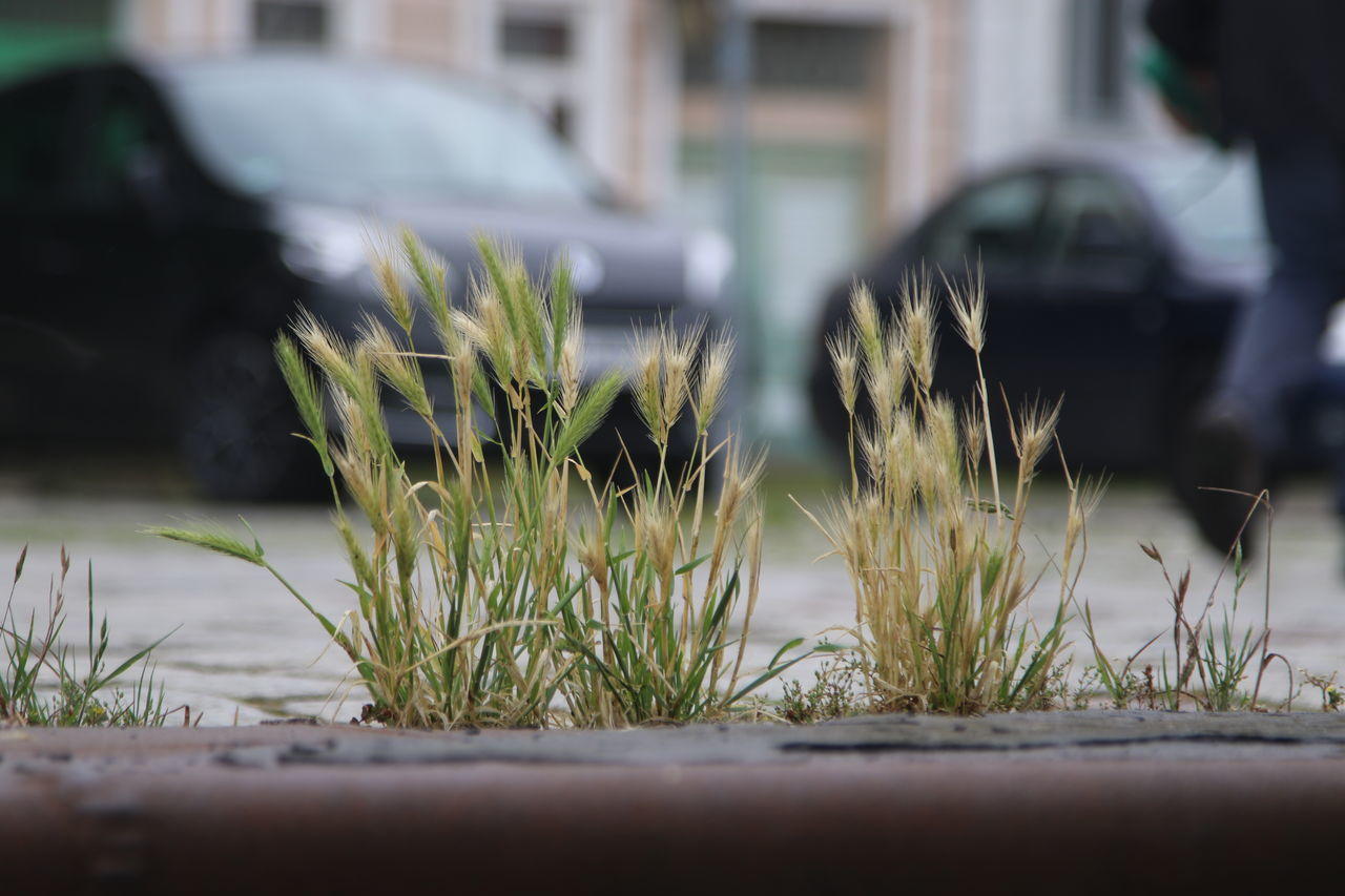 City Close-up Day Fragility Grass Growth Nature No People Outdoors Roadside