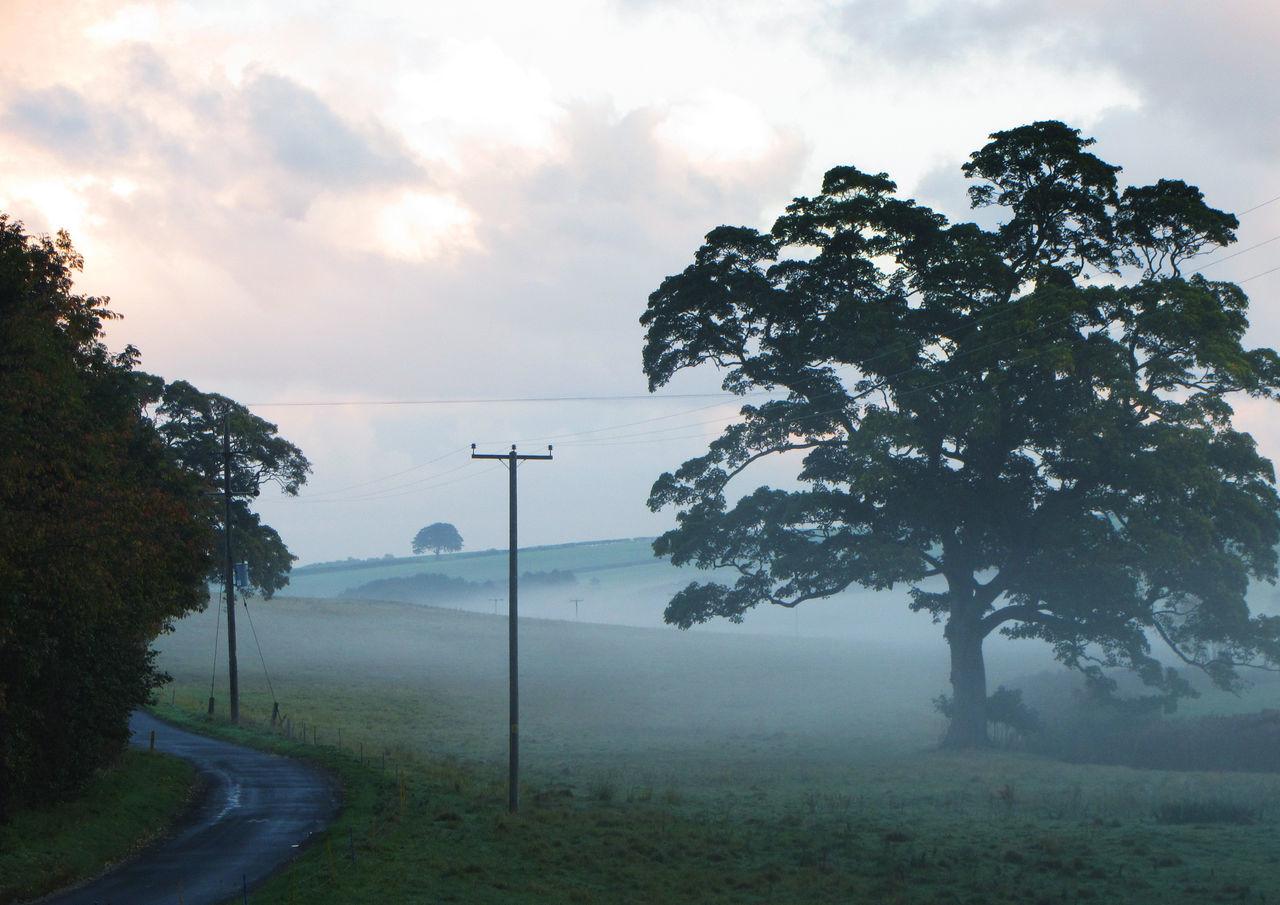 Beautiful stock photos of schmetterling, tree, road, transportation, street light