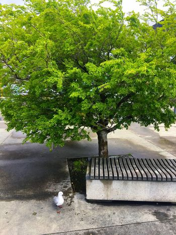 Will the seagull sit on this seat under the chair Tree No People Green Color Outdoors City Tree Seat Vacant Seat