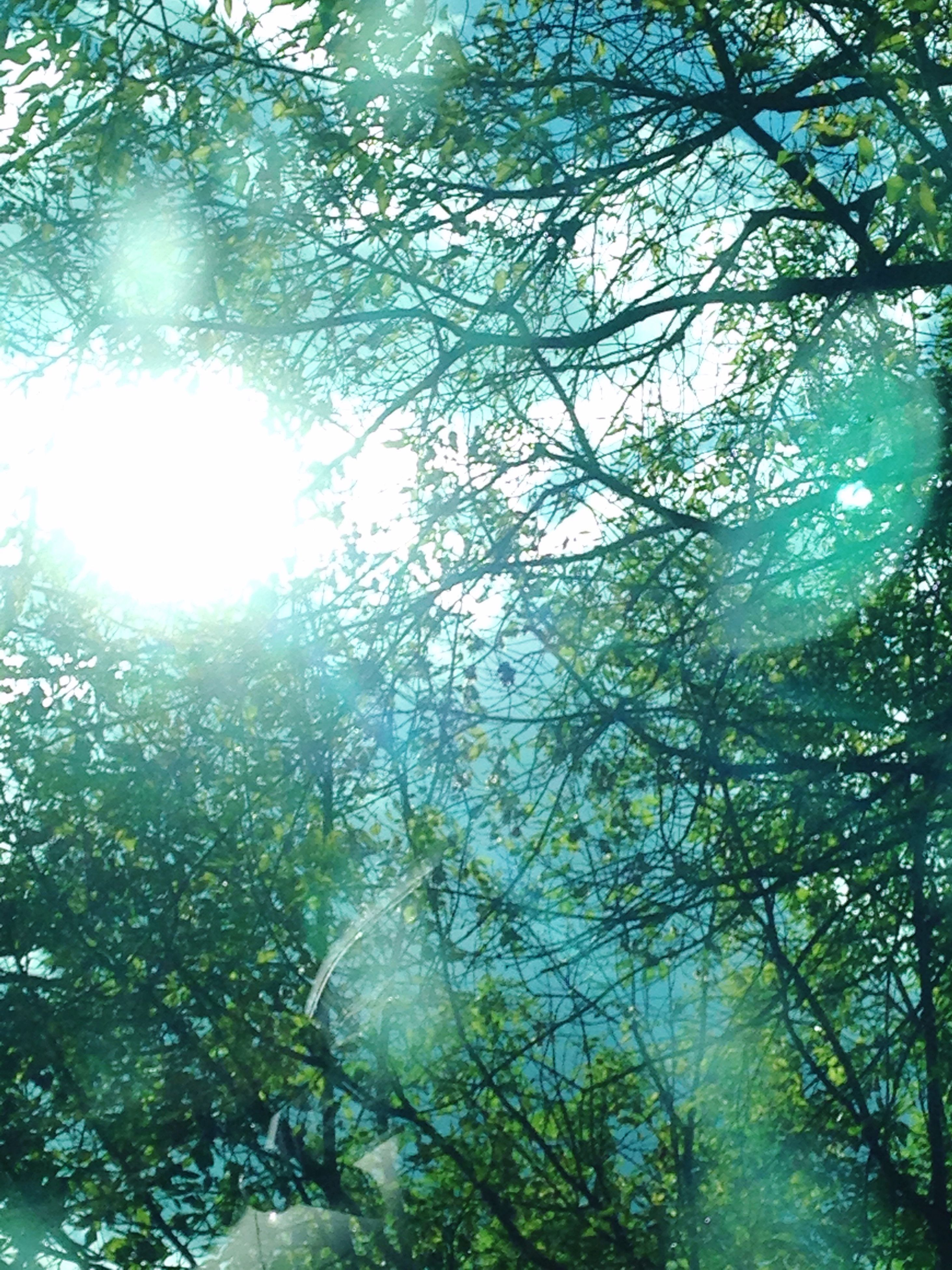 sun, branch, tree, sunlight, sunbeam, low angle view, lens flare, growth, green color, scenics, beauty in nature, bright, tranquil scene, sunny, nature, tranquility, brightly lit, day, sky, full frame, outdoors, non-urban scene, blue, back lit, green, woodland, lush foliage, majestic, streaming, solar flare, vacations