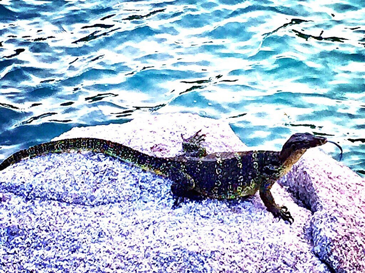 Water Animal Themes Real People One Person Nature Outdoors Day Animals In The Wild Beach Photography StillLifePhotography Capture The Moment Pankor Laut Tropical Paradise IPhoneography Beauty In Nature Beauty In Nature People