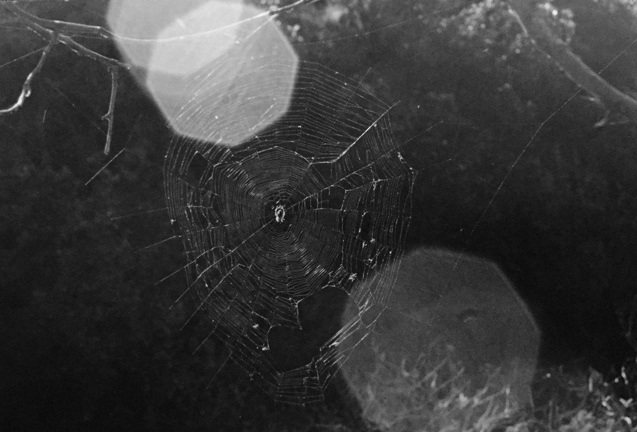 Spiderweb Spider Sun Glare Eyem Gallery Filmisnotdead Film Blackandwhite The Purist (no Edit, No Filter) Showcase: November The Great Outdoors - 2017 EyeEm Awards
