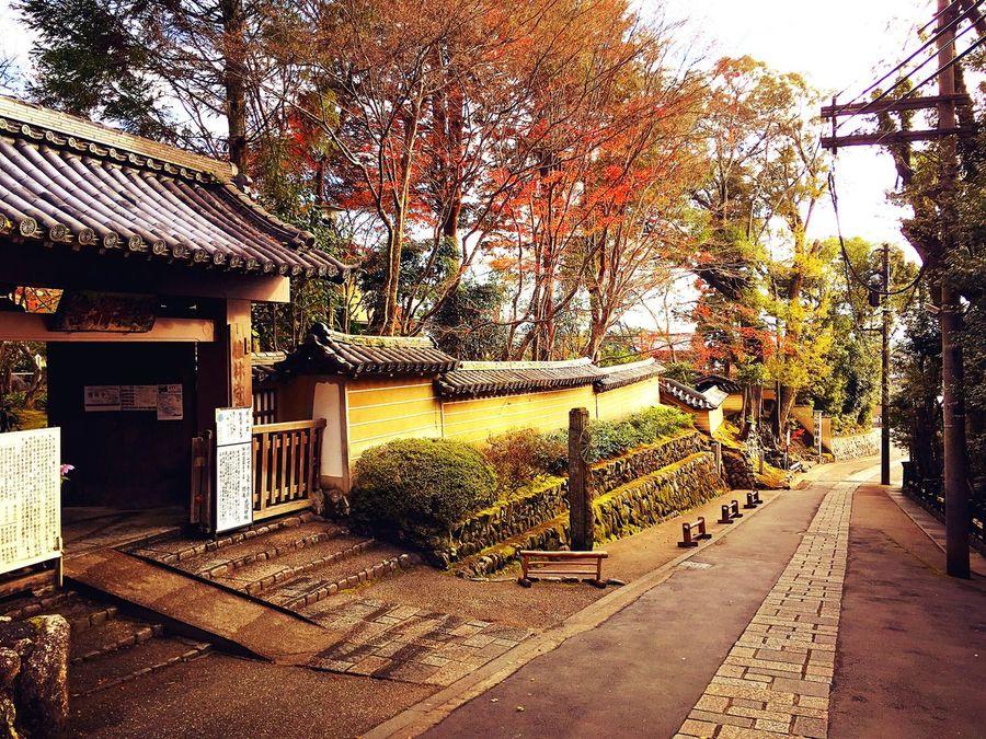 檀林寺 嵯峨野 京都 Kyoto Kyoto, Japan Kyoto Autumn Travel Destinations Beauty In Nature Hello World Enjoying Life Relaxing