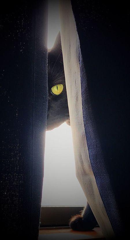 Pet Portraits Cat Eye Pets