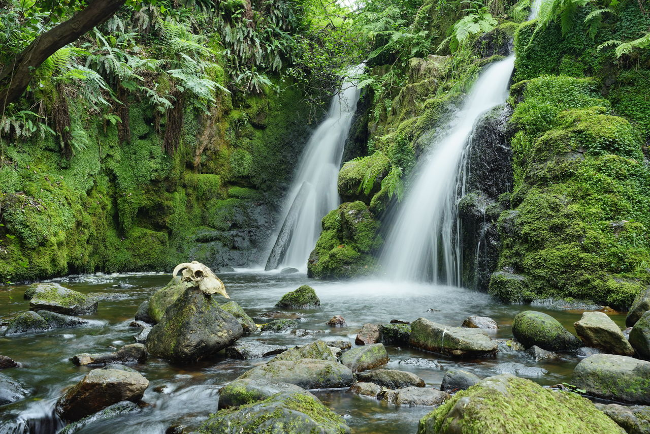 Waterfall Water Motion Long Exposure Nature Beauty In Nature No People Scenics Outdoors Green Color Day Tree Freshness Sky skull Life Death