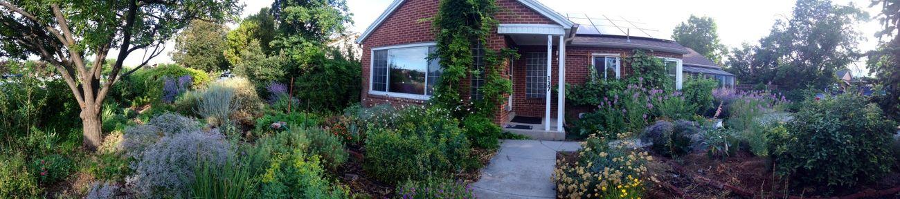 Childhood Home Orem, Utah Flowers,Plants & Garden My mom loves to garden.