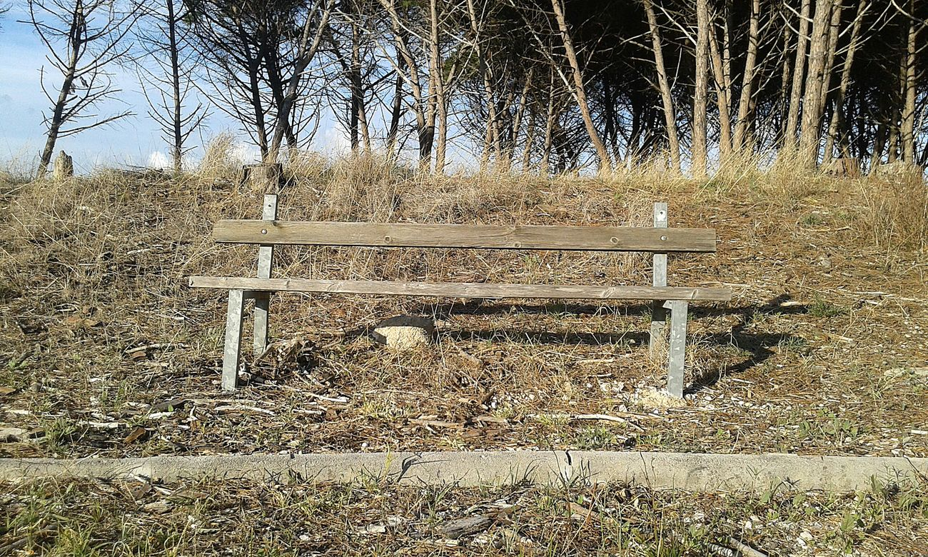 Peace And Quiet Arte_of_nature Nature Island Forest Bench Lesina Boscoisola Panchina Sky EyesEm