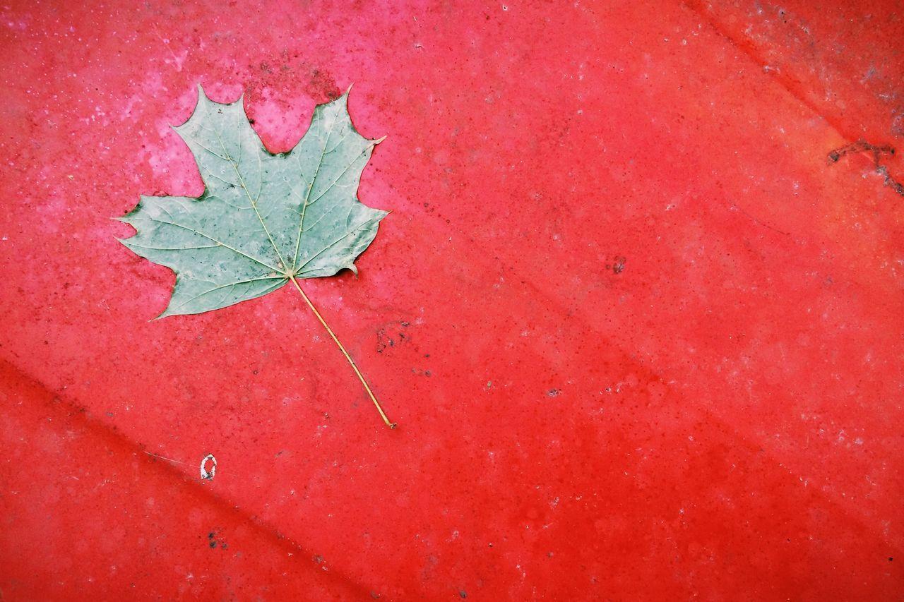 Urban Nature Red Canada Supernormal