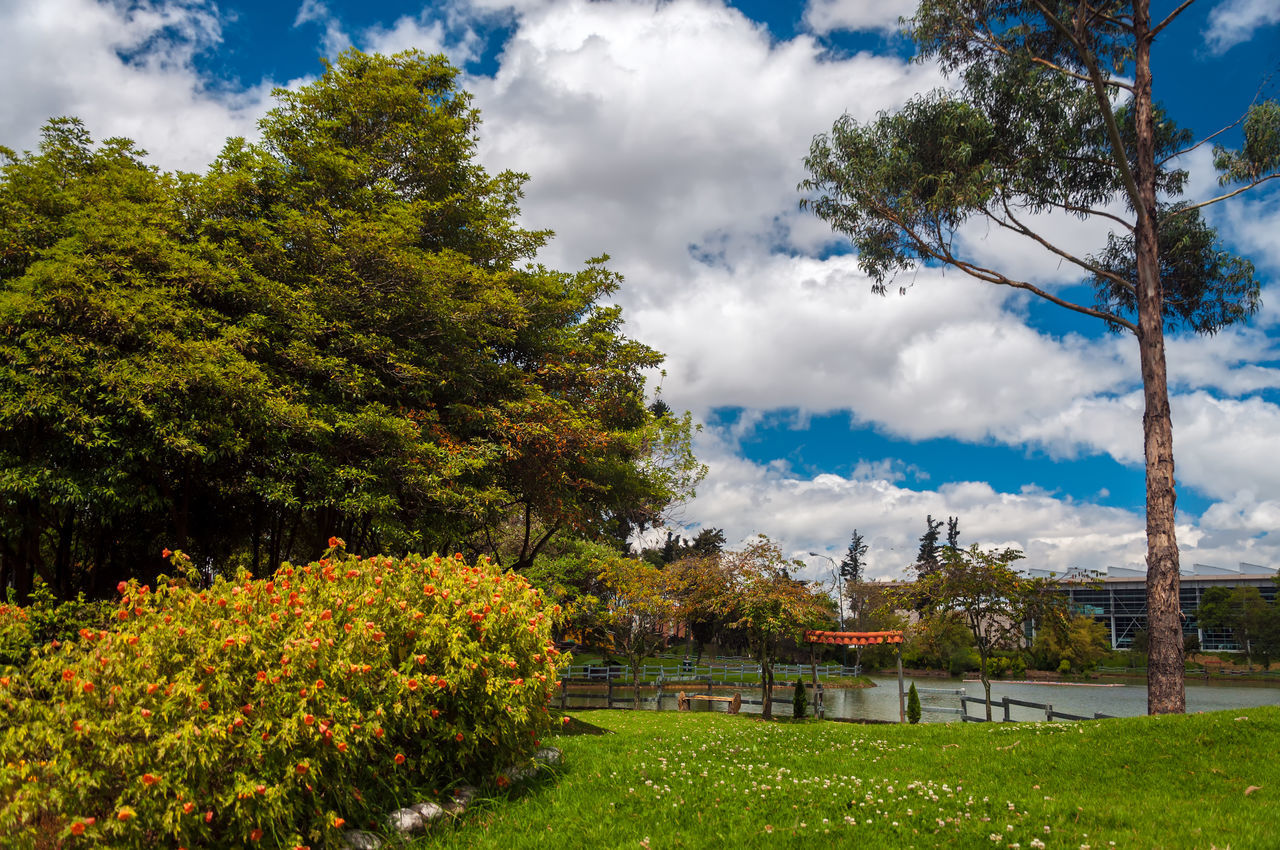 tree, cloud - sky, sky, growth, green color, nature, beauty in nature, grass, park - man made space, tranquility, outdoors, day, plant, no people, tranquil scene, scenics, landscape