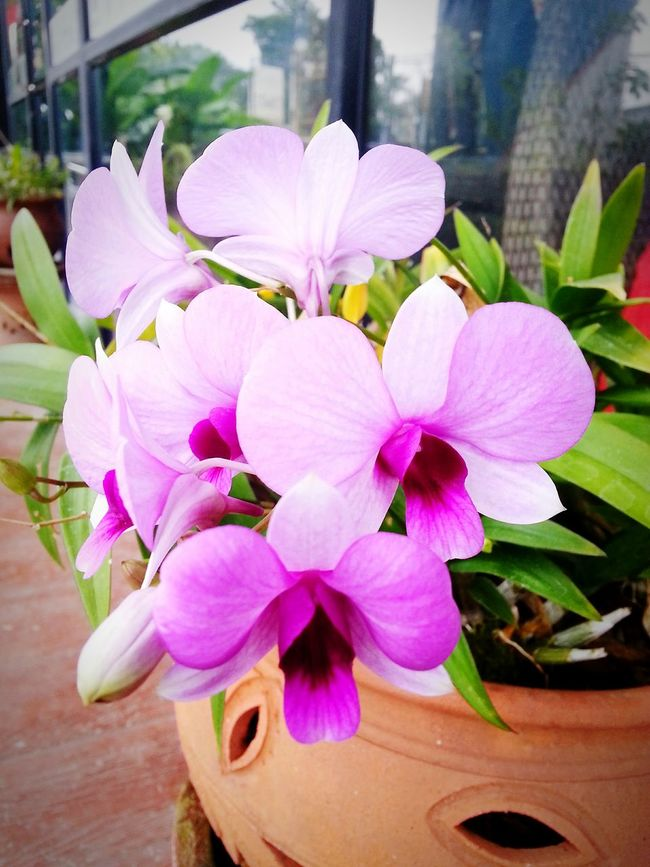 Orchids Orchid Blossoms Orchid Flower Orchidslover Orchid OrchidLover Orchid Flowers Orchids Collection Orchidflower