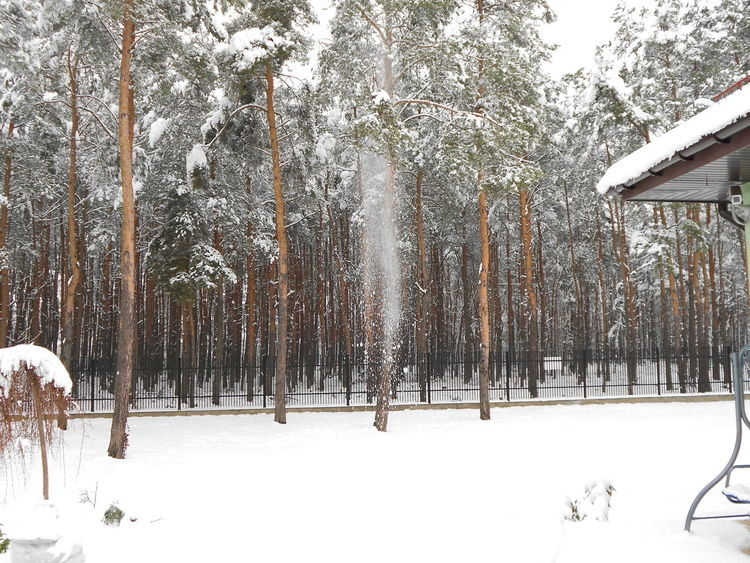 Beauty In Nature Cold Temperature Forest Nature Snow Snowing Tree Weather Winter