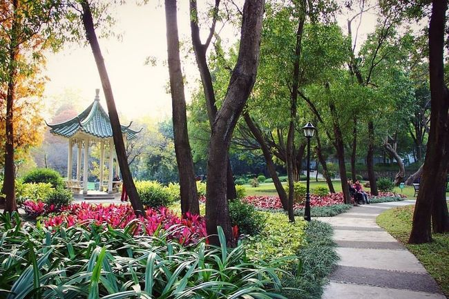 Walking and shooting photos in Huanggang Park in Guangzhou, Guangdong, China Tranquil Scene Footpath Park - Man Made Space Tranquility Beauty In Nature Scenics Nature Formal Garden Garden 500px Guangzhou Guangdong Parks Park Bench Park View Guangzhou,China Guangzhou China  GUANGZHOU•CHINA Park Trees Tree Silhouette Trees And Nature Pathway Path Paths First Eyeem Photo
