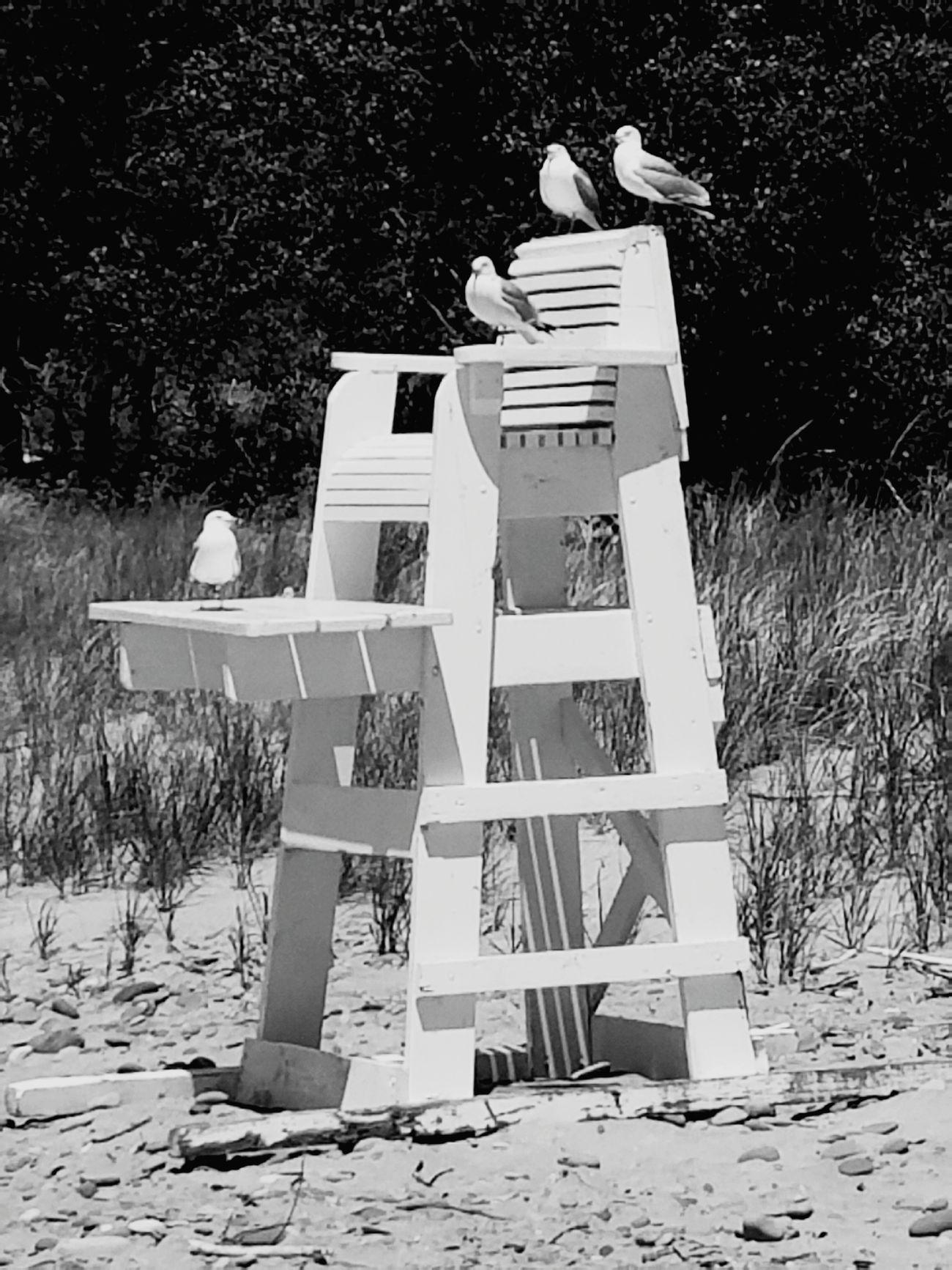 Beach, Chair, Seagull, Birds, Lifeguard, Lifeguard Chair