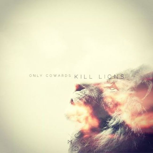Can people stop Killing Lions . Onlycowardskilllions Mcqueencreative mcqc