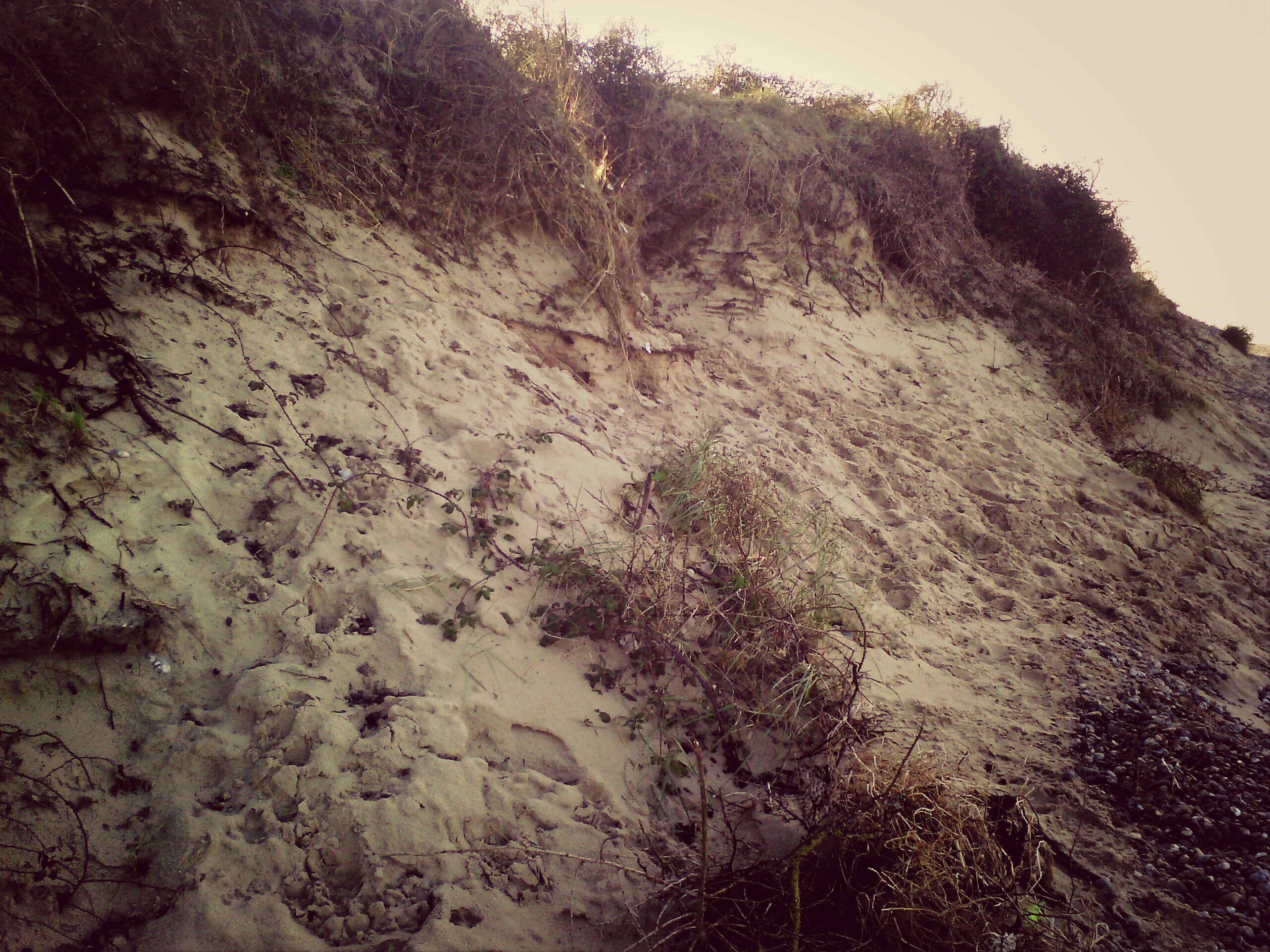 """"""" Pied de Dune"""""""