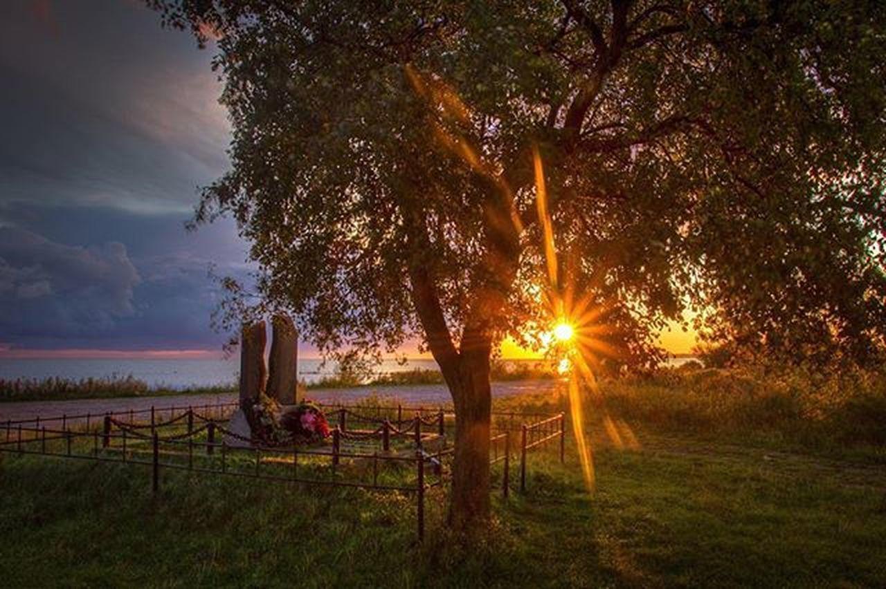 Доброе утро картинки природа лето