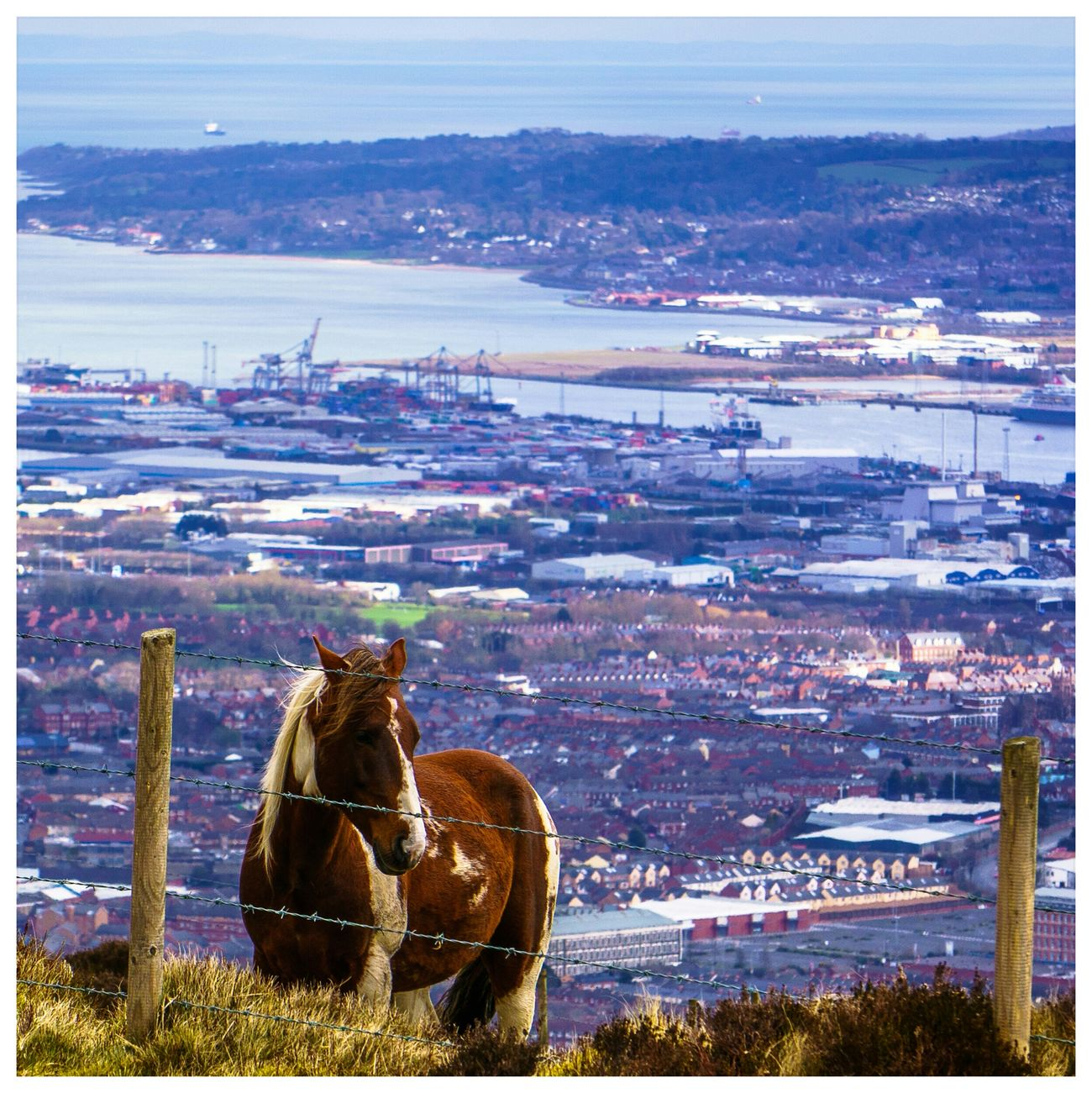 View From Above Pony Belfast Northern Ireland