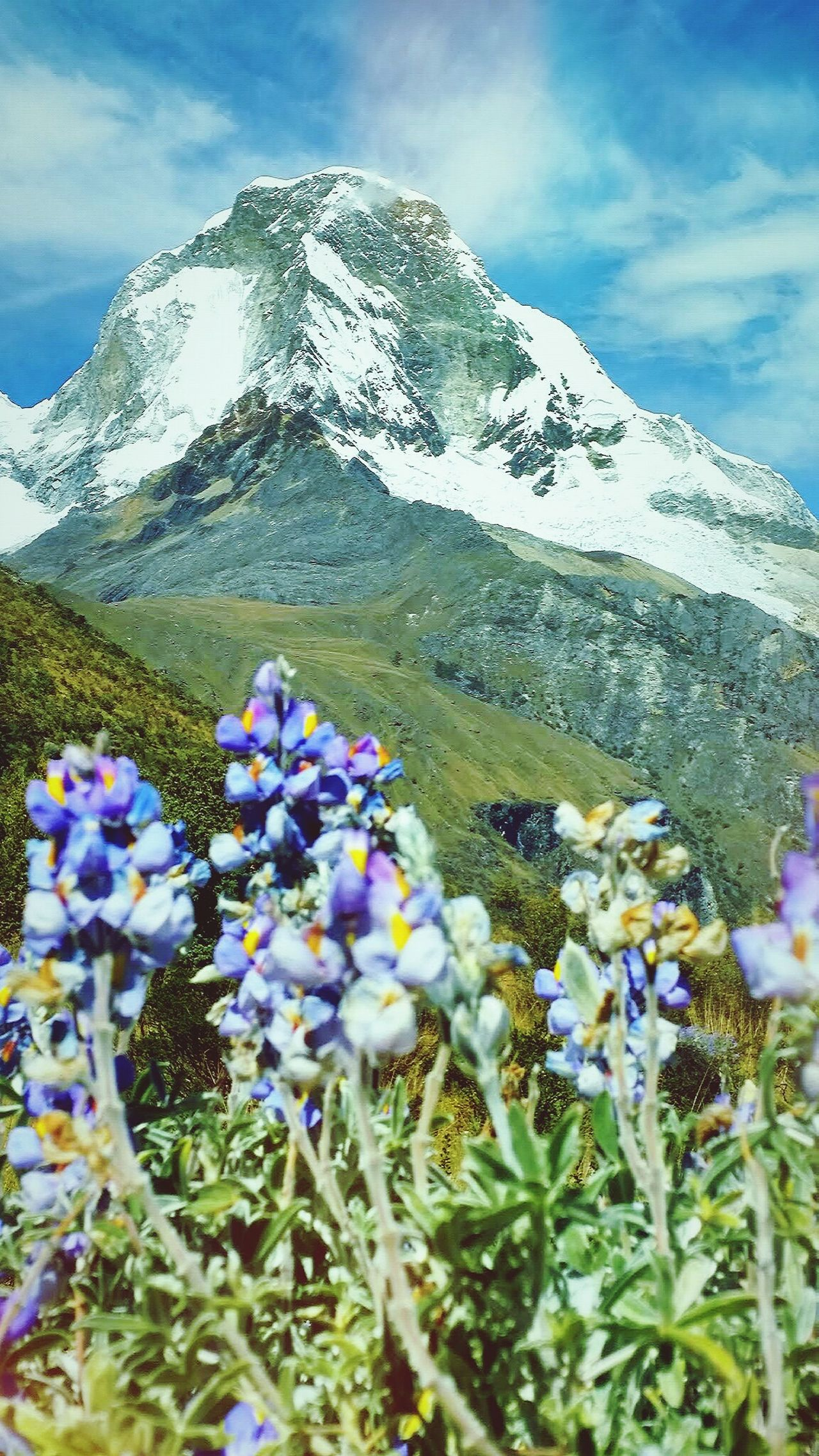 Huascarán Lavander Flowers Mountain View Snow Mountain Trekking Nature Love Freshness Magical Places Mountain And Snow View Beauty View Beauty In Nature TrekkingDay Landscape Photography Andesmountains Walk With Me Friends Trekking Trekking In Perú Lavander Colour Freshair Huaraz, Peru