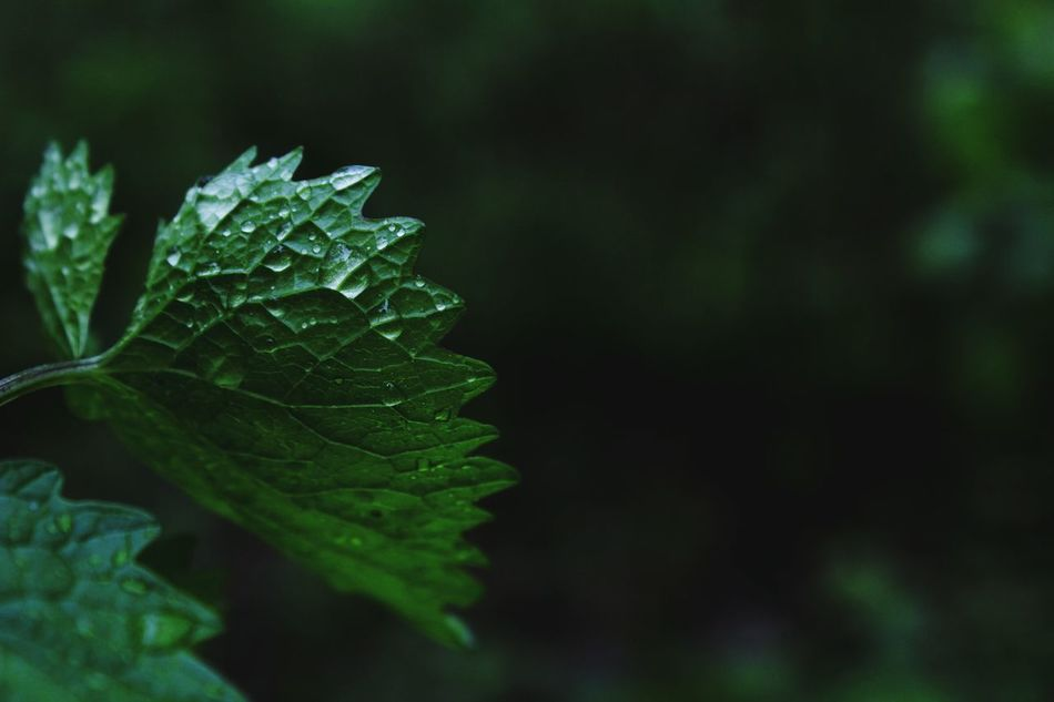Beautiful stock photos of rain, Botany, Close-Up, Day, Dew