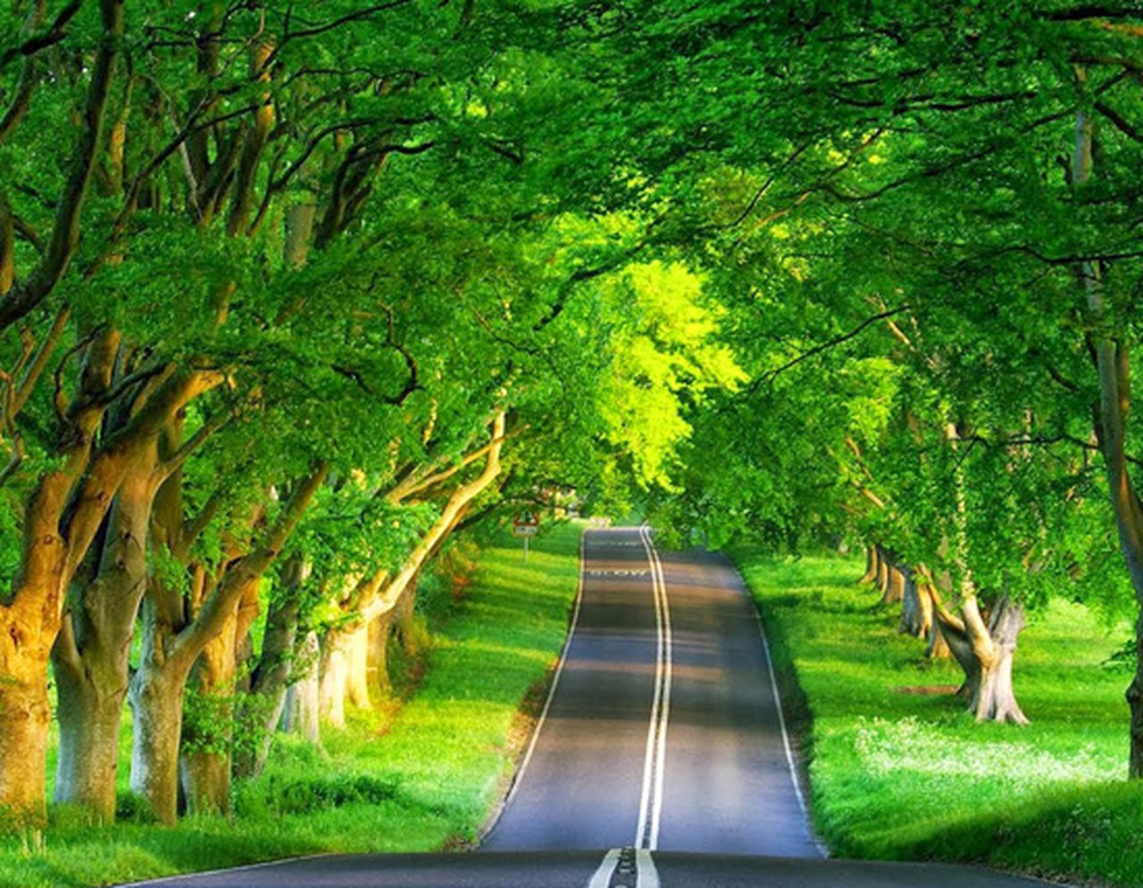 tree, road, nature, green color, growth, transportation, the way forward, outdoors, day, no people, grass, beauty in nature, mammal, animal themes