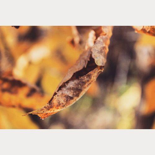 Осенняя мозайка ☀🔥❤ осенний_лес осень листья природный_фотоспам