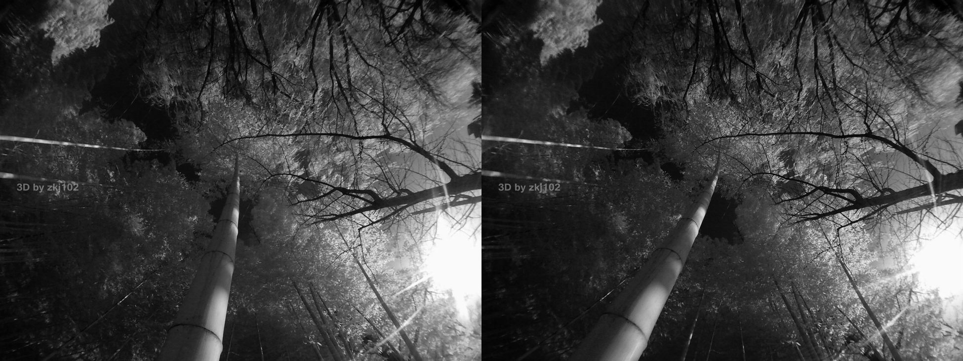 to sun Xuhui District Xuhui District Shanghai China Stereoscopic Stereoscopic Photography 3D 3D Photo Infrared Photography Information Infrared Infra Close-up No People Nature