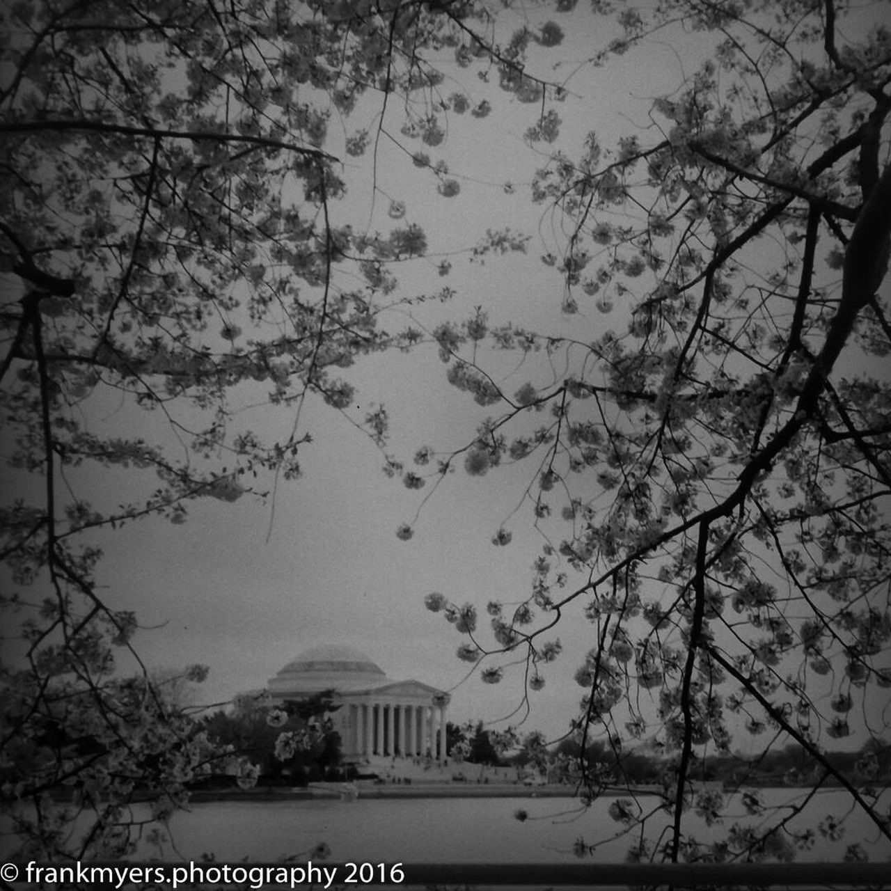 Cherry Blossoms Washington, D. C. Fujifilm Blackandwhite Jefferson Memorial