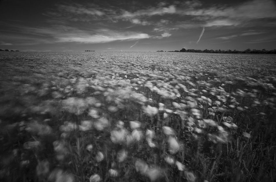 Movements Movement Photography Poppy In White Poppy Flowers Poppies Field Poppy Fields Poppies In Bw Poppy In Motion EyeEm Nature Lover Enjoying Life Nature_collection The Great Outdoors - 2016 EyeEm Awards Kronsberg Hanover Monochrome Photography Naturelovers capturing motion From My Point Of View Eyeem Market EyeEm Gallery Nature Photography EyeEm Flower Wind Movement Nature Is Art Poppy Season Black And White Welcome To Black