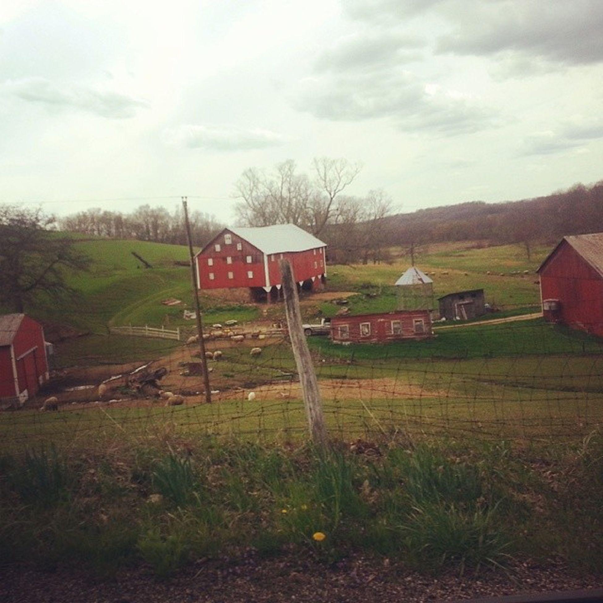 On a random Sunday drive I came across some really pretty scenes. Malvern Ohio Farms OhioFarms Landscapes Barn OhioBarns