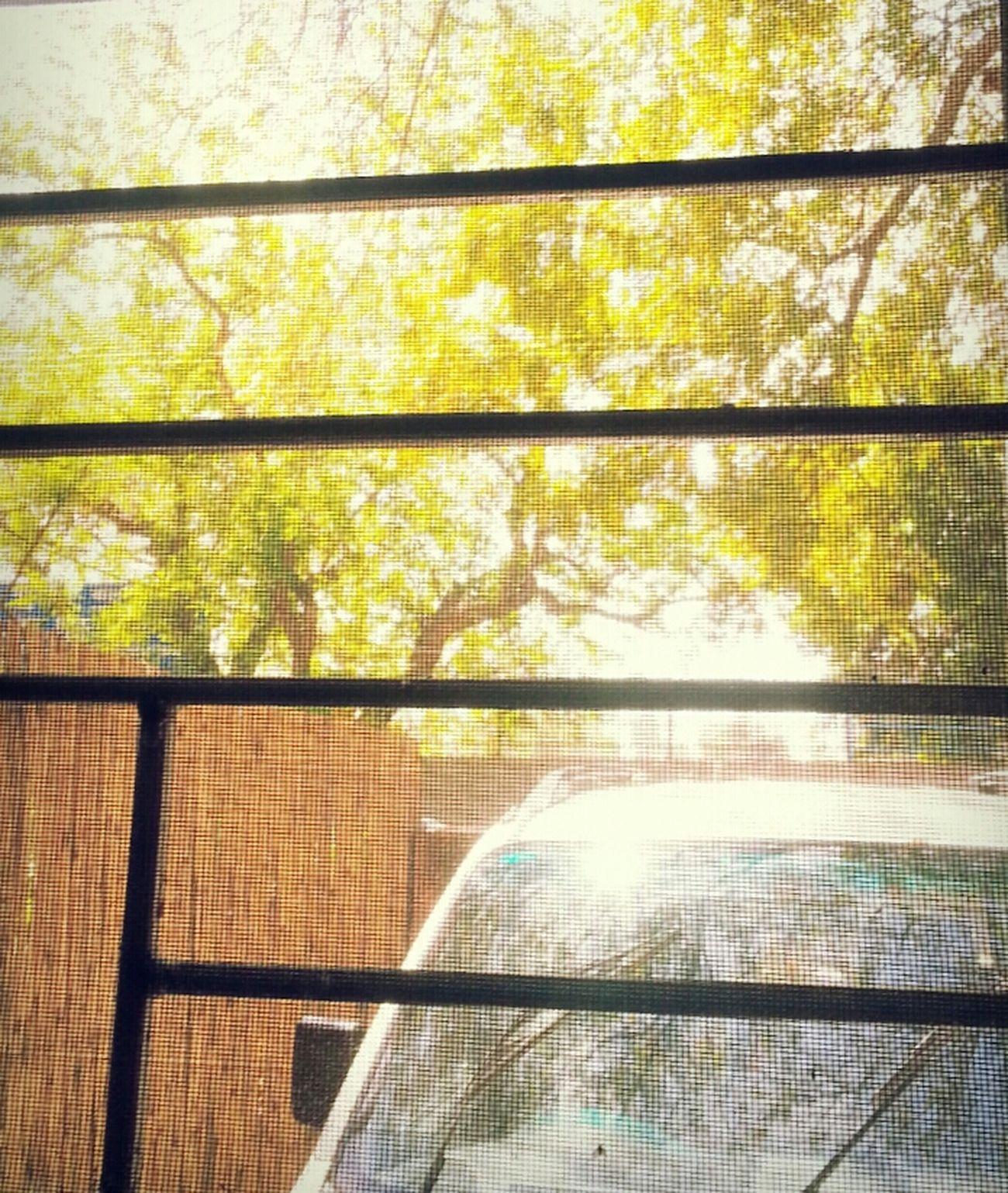 yellow foliage through my window. EyeEm Nature Lover EyeEm Best Edits Eye4photography  Whispers Of Spring