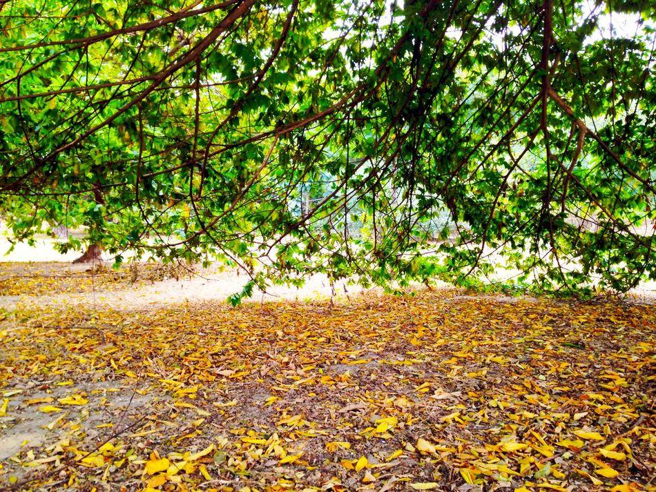 Tree Leaf Defoliation Segments Health And Destroy