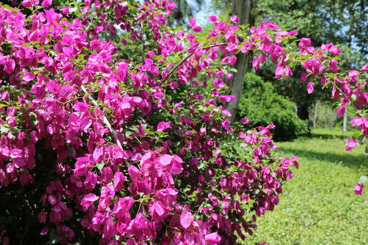 flower, pink color, growth, plant, no people, nature, day, outdoors, fragility, beauty in nature, tree, freshness
