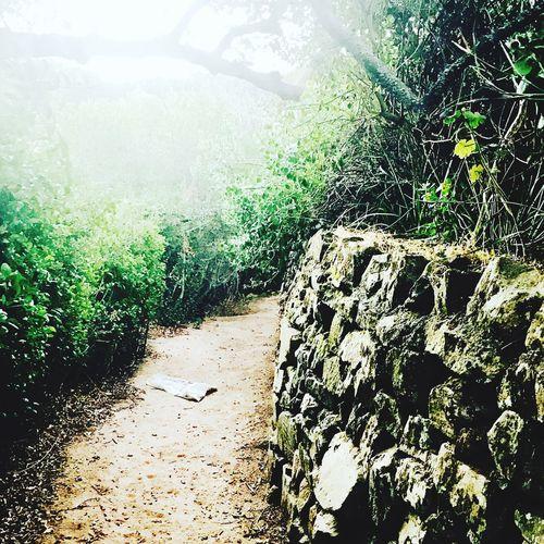 Table Mountain National Park. I take good #nature #pictureoftheday #pictures #tablemountainnationalpark #tablemountain #capetown #southafrica @flysaa @south_african_style @southafricaza @southafrica @southafricatourism @
