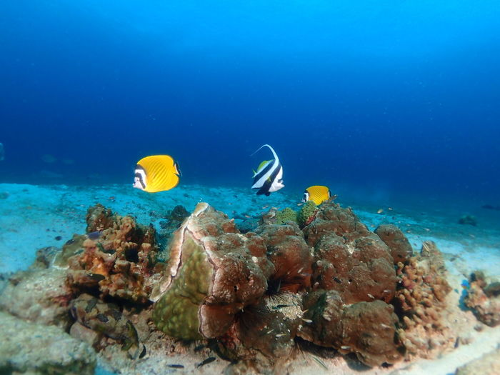 Scuba Diving Underwater Snorkeling Sea Life Sea UnderSea Vacations Blue Scuba Diving Coral Travel Swimming Water Travel Destinations Leisure Activity Adventure Multi Colored Nature Tropical Climate Aquatic Sport Beauty In Nature
