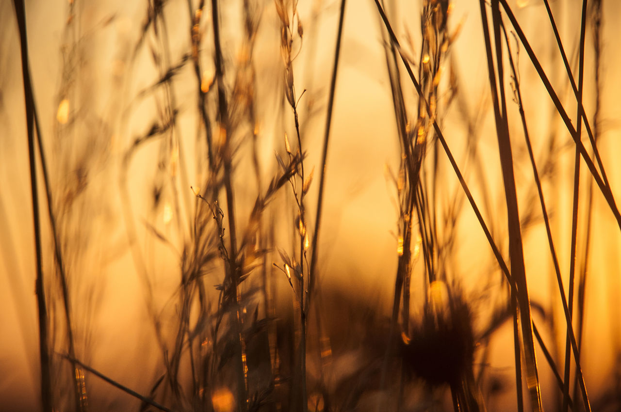 Beautiful Light Beauty In Nature Close-up Day End Of The Day Fields Of Gold Flowers Golden Hour Grass Grasslands Growth Meadow Meadow Flowers Nature No People Outdoors Plant Serenity Soft Sunset Tranquility Horizontal Warm Colors Warm Light