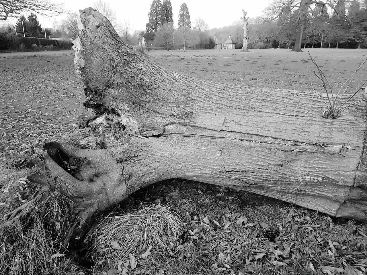 Operation anchorage Tree Grass Outdoors No People Nature Day Sky National Trust 🇬🇧 Tree Landscape Tredegar House Newport Textured  Wood - Material Decaying Wood Cracked Rotting Wood Dead Tree Rotting Tree Trunk Dead Plant Beauty In Nature Decaying Fallen Tree Nature Felled Tree