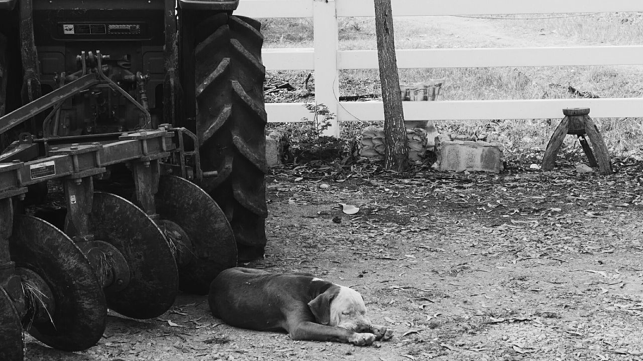 Farm life Day Close-up Commuter Low Section Whiteandblack Tractor Farm Fence Dog Animal Bulldog Land Tree Landscape Timekeeper Art Picture Simplelife Stillimage