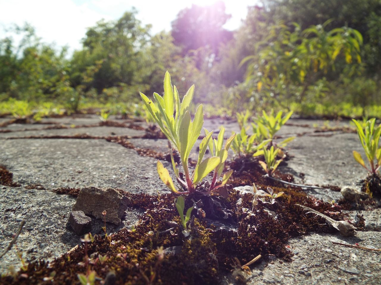 Close-Up Of Plant Growing On Cracked Road Against Sky