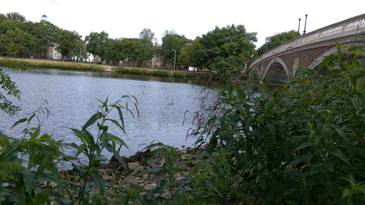 tree, water, architecture, growth, plant, built structure, outdoors, day, nature, river, bridge - man made structure, no people, building exterior, clear sky, grass, beauty in nature, sky