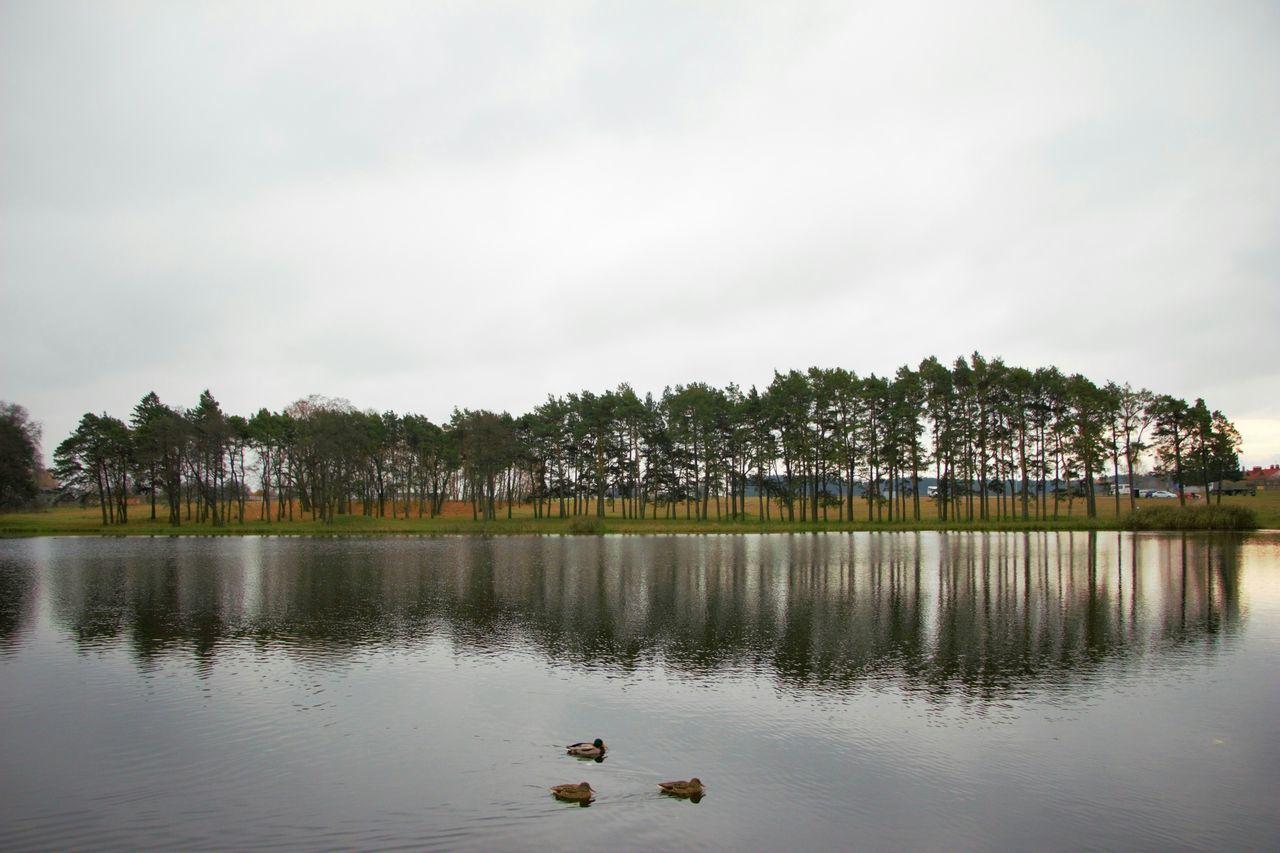 Beautiful stock photos of duck, Beauty In Nature, Bird, Cloud - Sky, Day