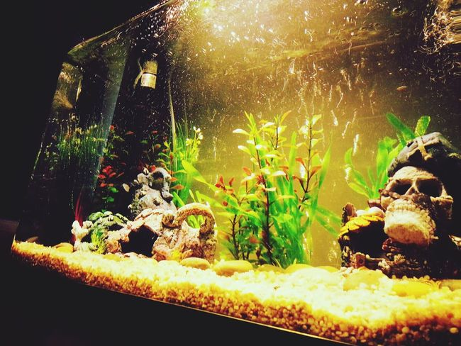 Right side of my fish tank Taking Photos Check This Out Our Fish Tank :) Home Sweet Home ♥
