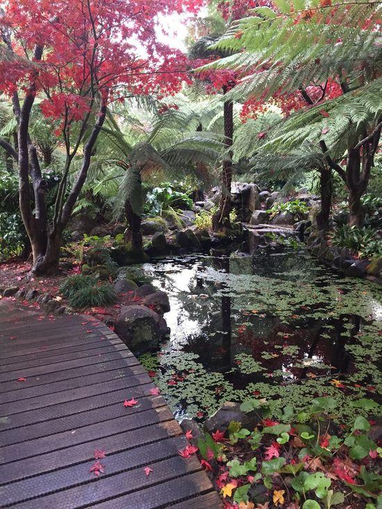Walking Around Nofilter Autumn Garden Reflection Australia
