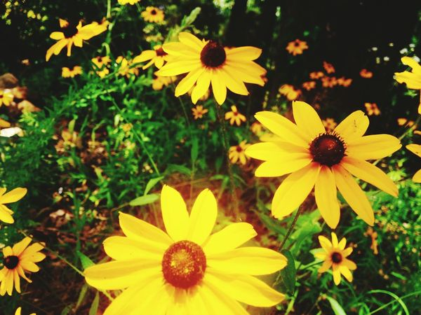 Taken in muldrow. Boyfriends land was coverd in these beautiful flowers, no one with a camera could resist taking photos!! Flowers Wild Flower Photography Flowers_collection Flowers, Nature And Beauty Flower Photography Beautiful Nature Beautiful Flowers 43GoldenMoments