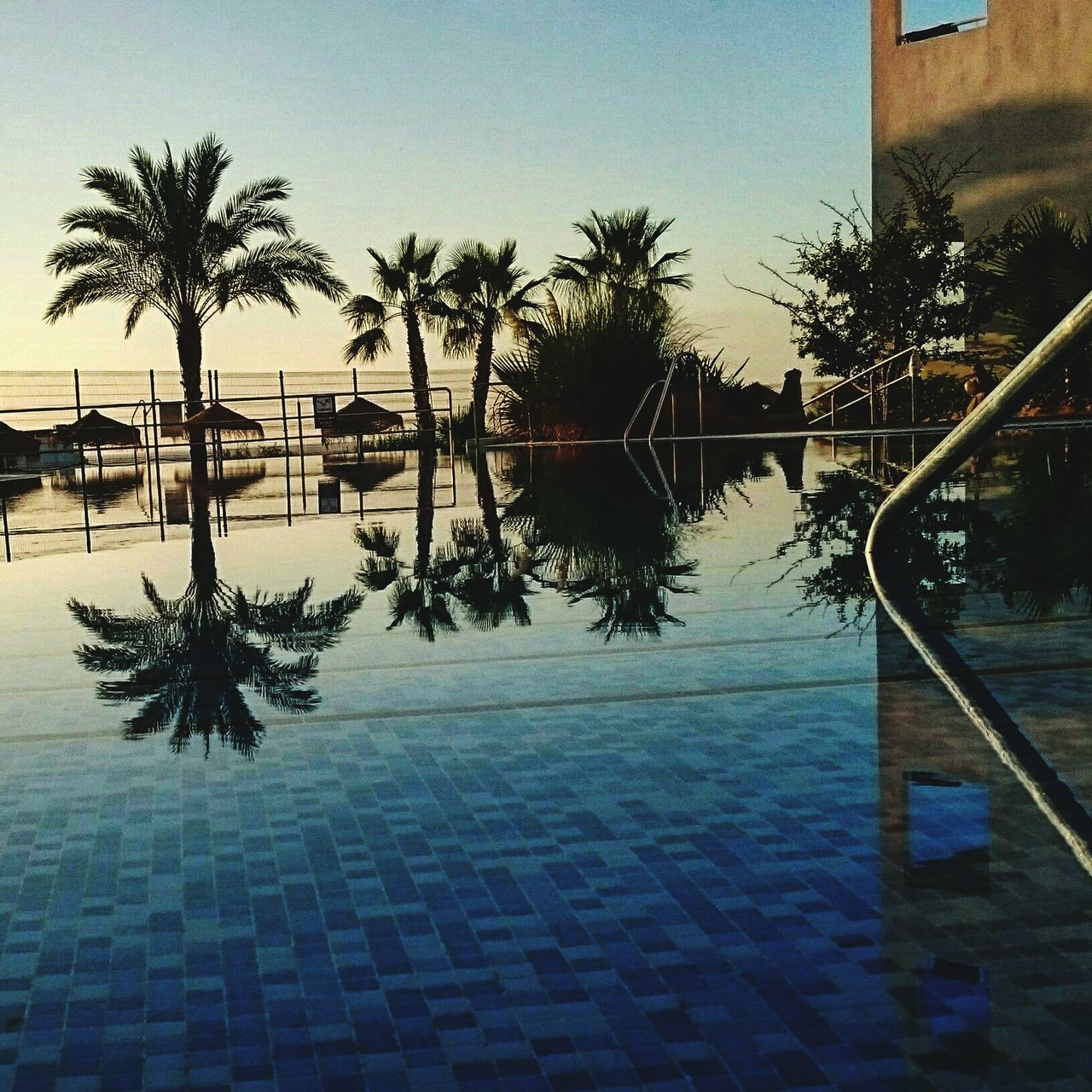 Reflection Tree Palm Tree Water Clear Sky Sky Outdoors No People Sunset Swimming Pool Day